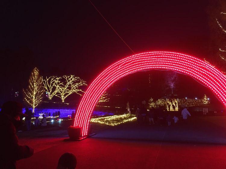 森林公園クリスマスイルミネーション