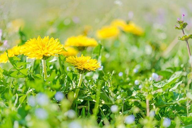 ◆4月:臨時休業及び定休日のお知らせ◆