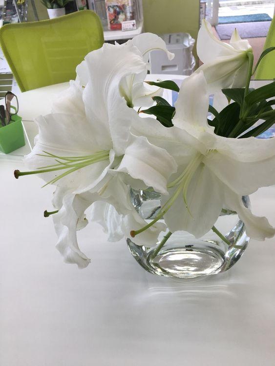 ゆーりが咲いたゆーりが咲いた、真っ白なゆーりが~ヽ(^o^)丿