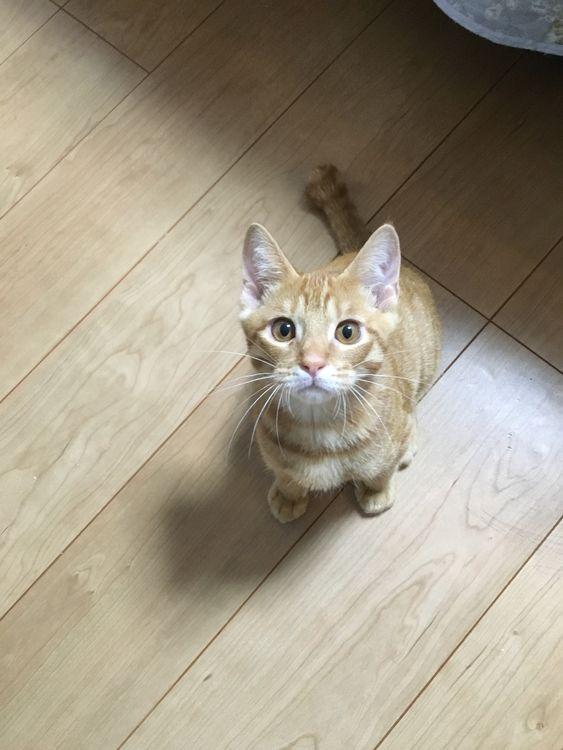 家族になって1ヵ月のゆずちゃん(^^) 顔付きがだいぶ変わってます!