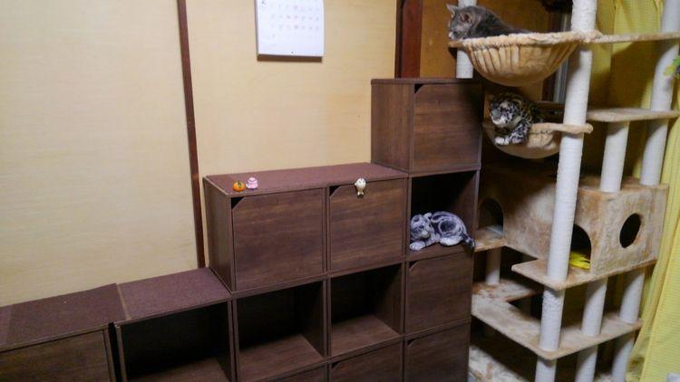 猫が遊べるお部屋作りませんか?