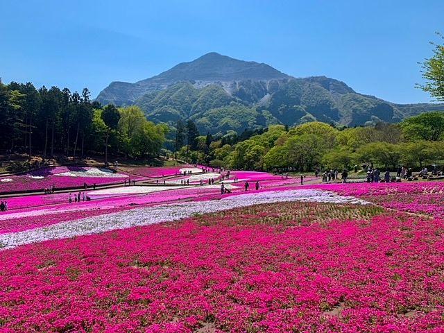 秩父の芝桜キタヨキタヨヽ(゚∀゚=゚∀゚)ノキチャッタヨ-!!!!!!